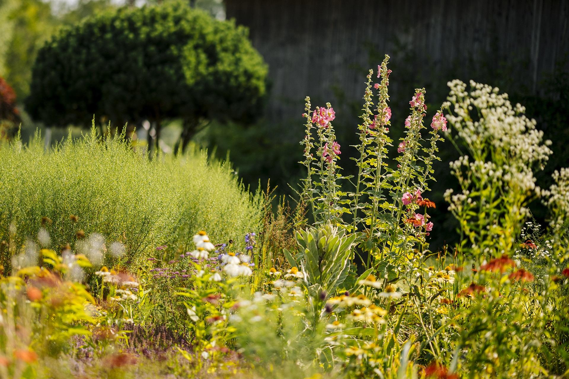 Gartenforum gestaltet Traumgärten