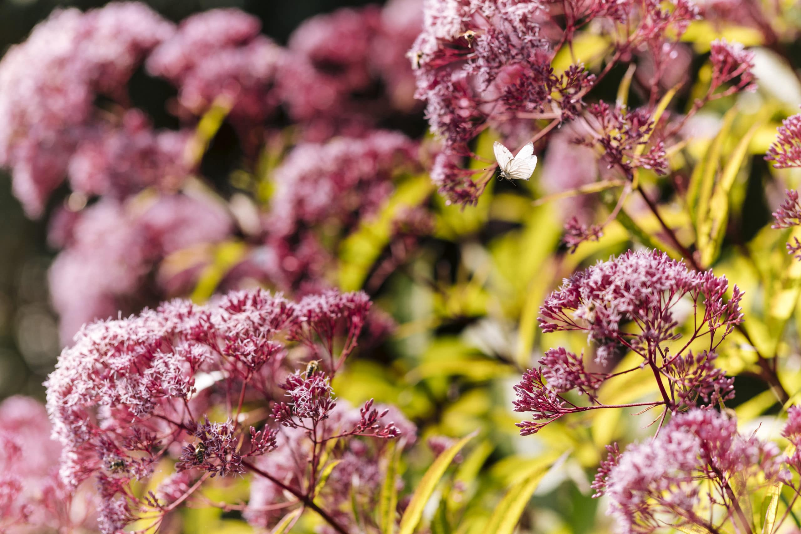 Garten- und Pflanzenstilleben